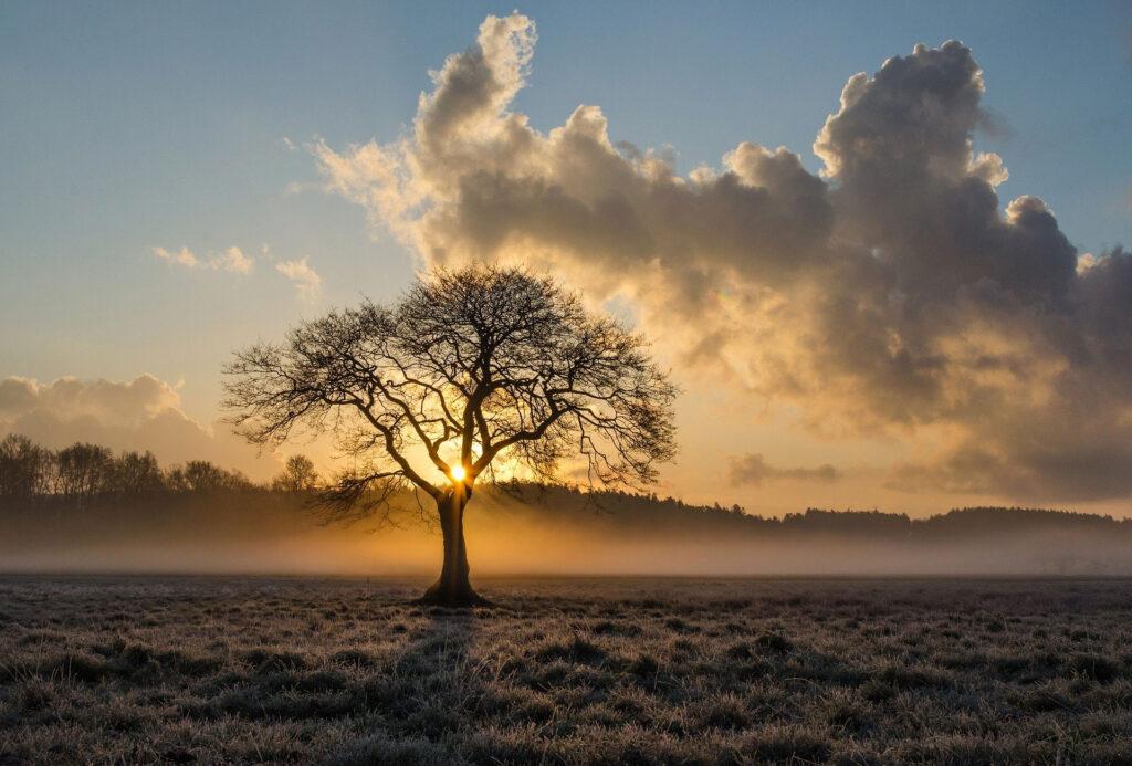 夕焼けに立つ樹